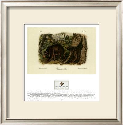 Cinnamon Bear by John James Audubon Pricing Limited Edition Print image