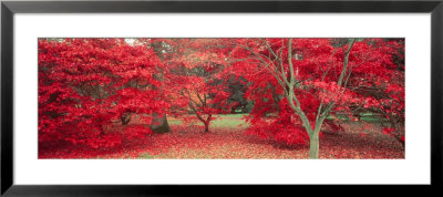 Trees In Fall, Gloucestershire, Uk by Peter Adams Pricing Limited Edition Print image