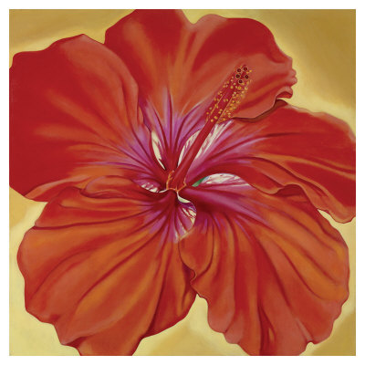 Orange Hibiscus by Roberta Aviram Pricing Limited Edition Print image