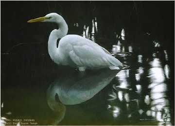 Mangrove Morning by Robert Bateman Pricing Limited Edition Print image