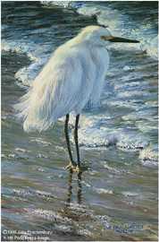 Dawn On Beach Egret by Amy Brackenbury Pricing Limited Edition Print image