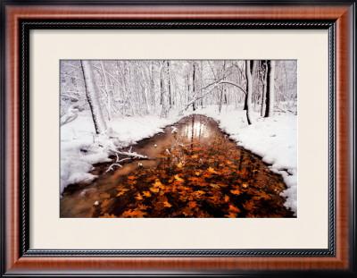 Autumn Passage by Jim Brandenburg Pricing Limited Edition Print image