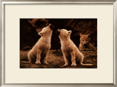 First Song by Jim Brandenburg Pricing Limited Edition Print image