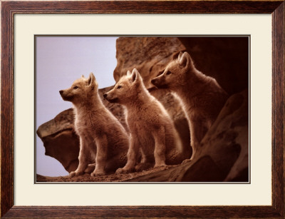 Wolf Pups by Jim Brandenburg Pricing Limited Edition Print image