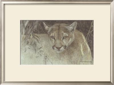 Tropical Cougar by Robert Bateman Pricing Limited Edition Print image