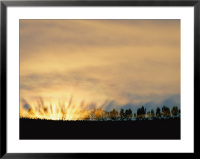 Sun Rising From Behind The Trees On A Foggy Morning by Annie Griffiths Belt Pricing Limited Edition Print image