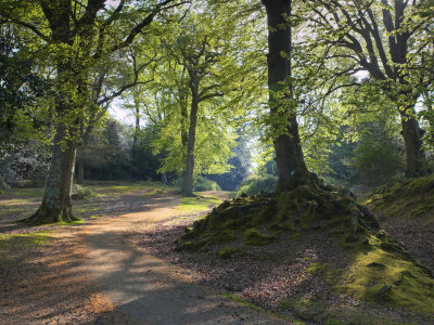 Pathway Through The Woods, New Forest, Hampshire, England, United Kingdom, Europe by Adam Burton Pricing Limited Edition Print image