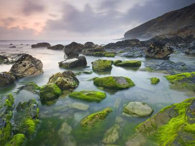 Vibrant Green Algae Exposed At Low Tide At Tregardock Beach, North Cornwall, United Kingdom by Adam Burton Pricing Limited Edition Print image