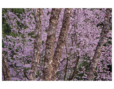Brookside Gardens 2 by Cory Brodzinski Pricing Limited Edition Print image