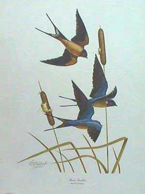 Barn Swallow by Guy Coheleach Pricing Limited Edition Print image