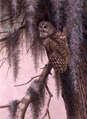 Barred Owl by Guy Coheleach Pricing Limited Edition Print image