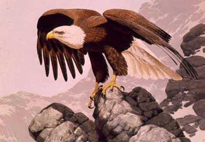 Bicentennial Eagle by Guy Coheleach Pricing Limited Edition Print image