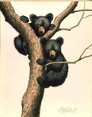 Black Bear Cubs by Guy Coheleach Pricing Limited Edition Print image