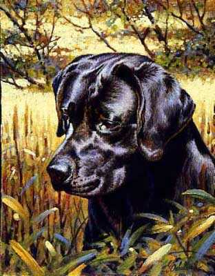 Black Lab Retriever by Guy Coheleach Pricing Limited Edition Print image