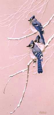 Blue Gray Blue Jay by Guy Coheleach Pricing Limited Edition Print image