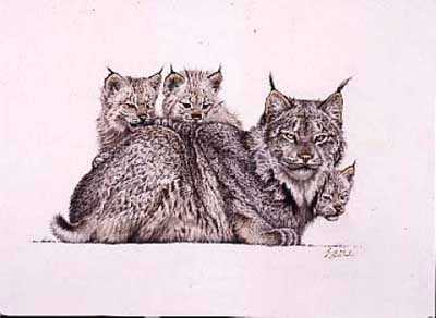 Lynx Mother & Kittens by Guy Coheleach Pricing Limited Edition Print image