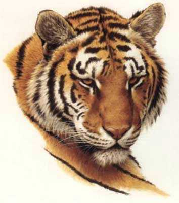 Tiger Head by Guy Coheleach Pricing Limited Edition Print image