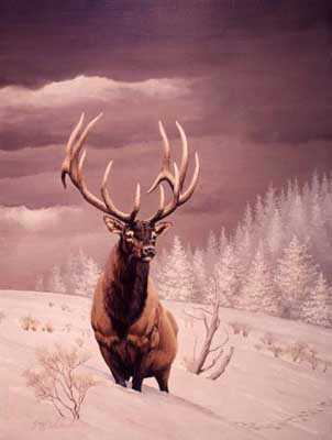 Wapiti Stag by Guy Coheleach Pricing Limited Edition Print image