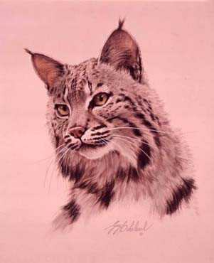 Cats America Bobcat by Guy Coheleach Pricing Limited Edition Print image