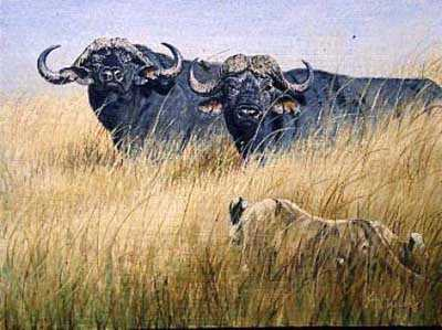 Buffalo Pr Lionsgccnvs by Guy Coheleach Pricing Limited Edition Print image