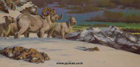 Dall Sheep Snow by Guy Coheleach Pricing Limited Edition Print image