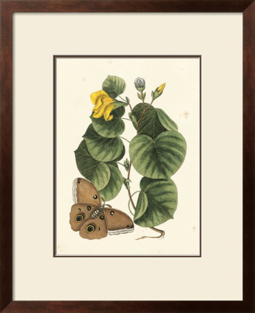 Butterfly And Botanical I by Mark Catesby Pricing Limited Edition Print image