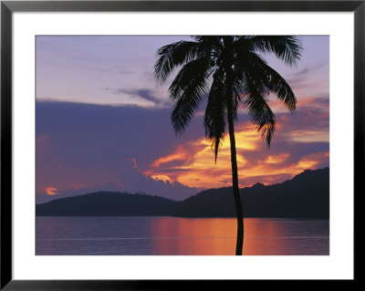 Palm Tree Silhouetted Against Fiery Clouds And Sea At Sunrise by Mark Cosslett Pricing Limited Edition Print image