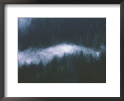 A Blanket Of Fog Covers Treetops In Misty Fjord National Monument by Bill Curtsinger Pricing Limited Edition Print image