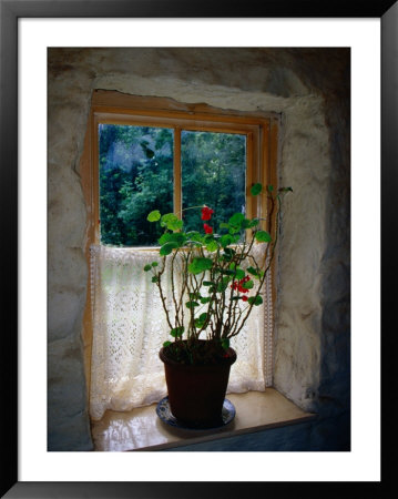 Cottage Window At Ulster Folk And Transport Museum, Down, Northern Ireland, United Kingdom by Richard Cummins Pricing Limited Edition Print image
