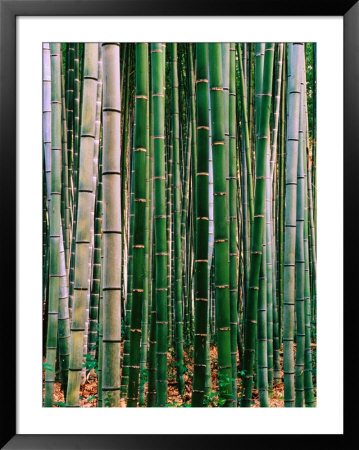 Grove Of Bamboo, Sagano District by Frank Carter Pricing Limited Edition Print image