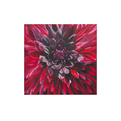 Fabulous Black Wizard Dahlia by Sarah Caswell Pricing Limited Edition Print image