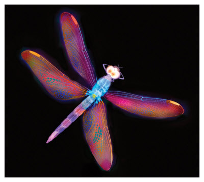 Dragonfly Iii by Harold Davis Pricing Limited Edition Print image