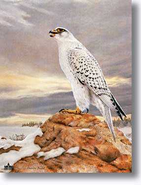 Gyrfalcon by Charles Frace' Pricing Limited Edition Print image