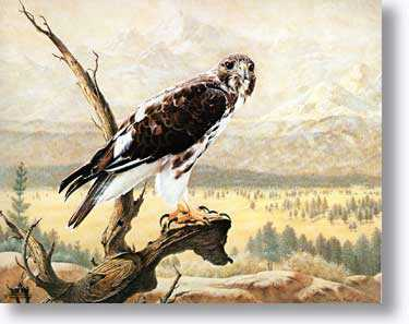 Harlans Hawk by Charles Frace' Pricing Limited Edition Print image