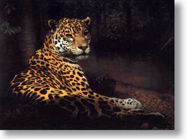 Jaguar by Charles Frace' Pricing Limited Edition Print image