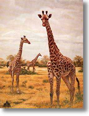 Masai Giraffes by Charles Frace' Pricing Limited Edition Print image