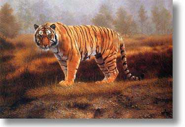 Royal Bengal by Charles Frace' Pricing Limited Edition Print image