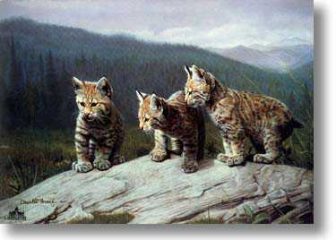 Three Of A Kind by Charles Frace' Pricing Limited Edition Print image