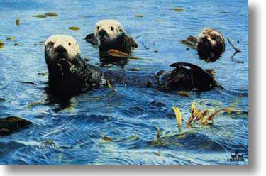 Treasures Of Sea by Charles Frace' Pricing Limited Edition Print image