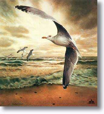 Herring Gull by Charles Frace' Pricing Limited Edition Print image