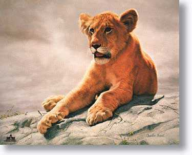 Lion Cub by Charles Frace' Pricing Limited Edition Print image
