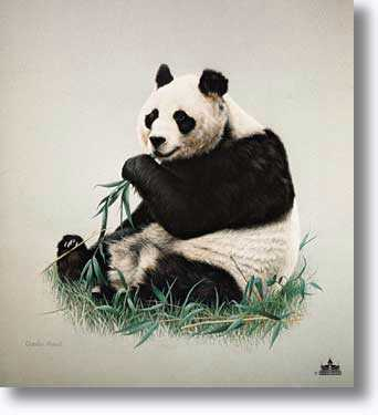 Giant Panda by Charles Frace' Pricing Limited Edition Print image