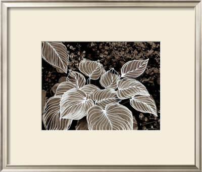 Sepia Hosta I by Francine Funke Pricing Limited Edition Print image