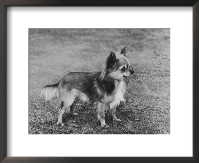 Champion Rozavel Wolf Cub Owner: Gray by Thomas Fall Pricing Limited Edition Print image