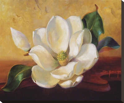 Magnolia Glow Ii by Fran Di Giacomo Pricing Limited Edition Print image
