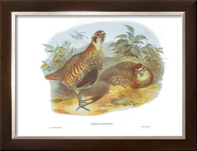 Perdix Hodgsoniae by John Gould Pricing Limited Edition Print image