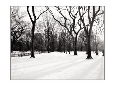 New York Trees by Jason Graham Pricing Limited Edition Print image