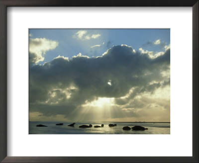 Grey Seal, Halichoerus Grypus Group On Sand Bar, Moody Ligh Ting, Uk by Mark Hamblin Pricing Limited Edition Print image