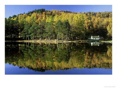 Loch An Eilein In Autumn, Larch & Scots Pine & Reflections, Cairngorms National Park, Scotland by Mark Hamblin Pricing Limited Edition Print image