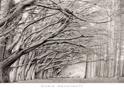 Crystal Grove by Chris Honeysett Pricing Limited Edition Print image